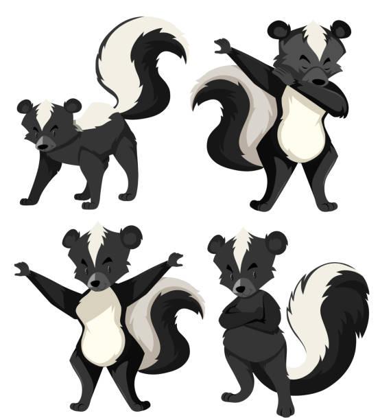A set of skunk A set of skunk illustration skunk stock illustrations