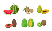 Collection set of various sliced tropical exotic fruits. Watermelon, longan, papaya, avocados, jackfruit, kiwi. Isolated icons set illustration on a white background in cartoon style.