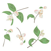 Set of small twigs with white berries and green leaves common snowberry (Symphoricarpos albus). Garden bush, Christmas decoration. Digital draw botanical illustration in watercolor style, vector