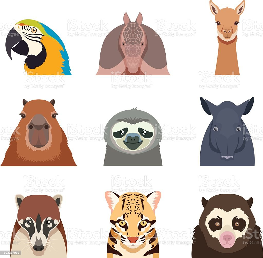 Set of south america animals flat icons vector art illustration