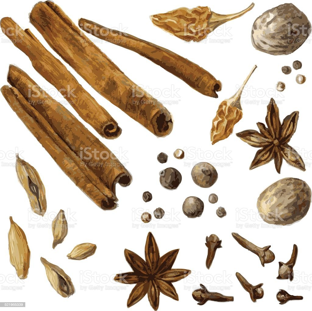 set of spice, drawing by watercolor vector art illustration