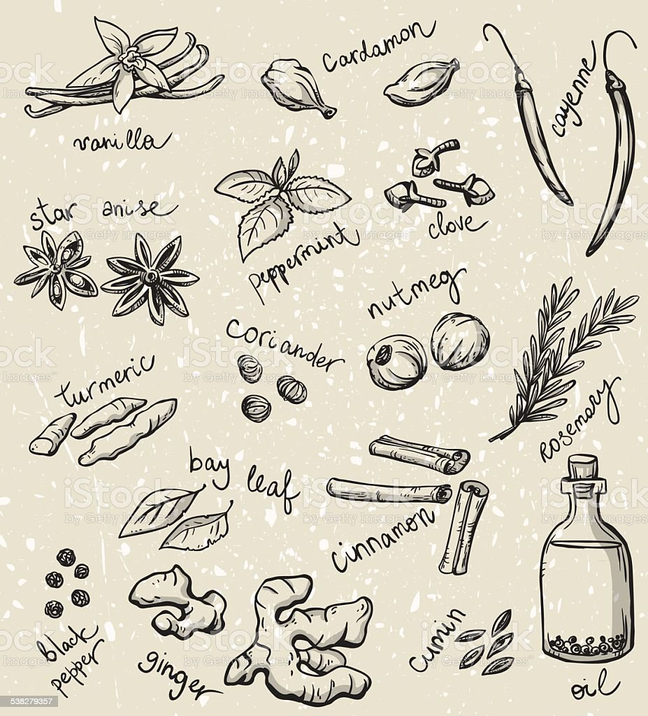 set of spices and herbs vector illustration vector art illustration