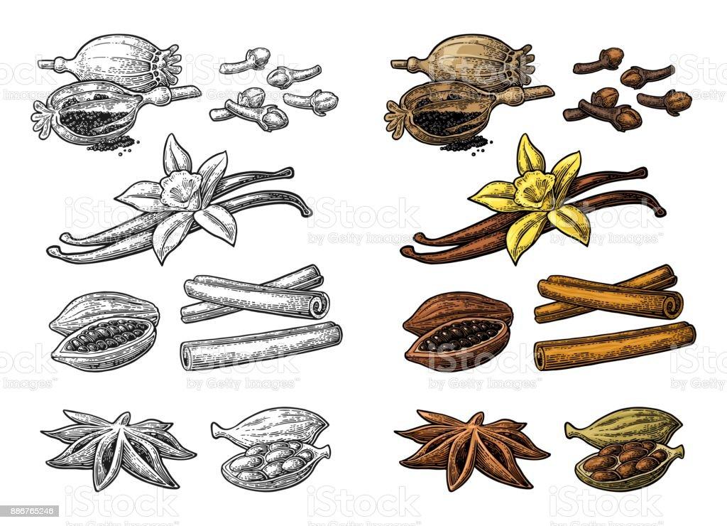 Set of spices. Anise, cinnamon, cocoa, vanilla, poppy vector art illustration