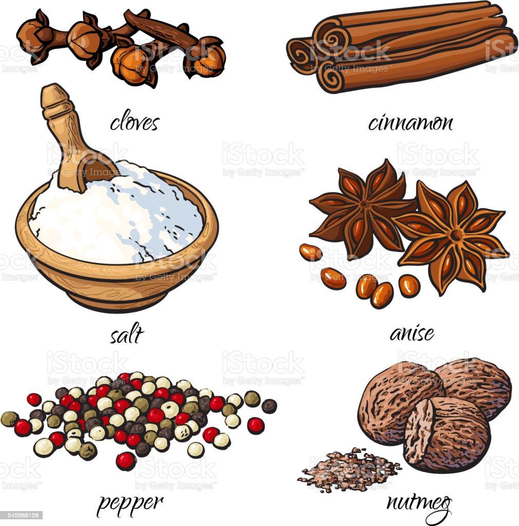 Set of spices - cinnamon, pepper, anise, nutmeg, salt, clove vector art illustration