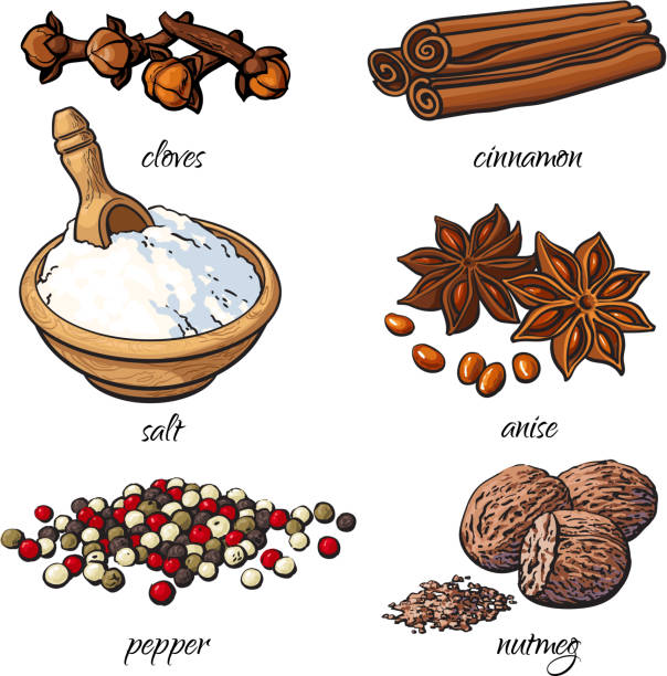 Set of spices - cinnamon, pepper, anise, nutmeg, salt, clove Set of spices - cinnamon, pepper, anise, nutmeg, salt, clove, isolated sketch style vector illustration on white background. Traditional cooking spices in Asian and Indian cuisine nutmeg stock illustrations