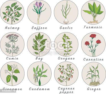 Ein set von gew rzen kr utern und pflanzen icons for Salvia da colorare