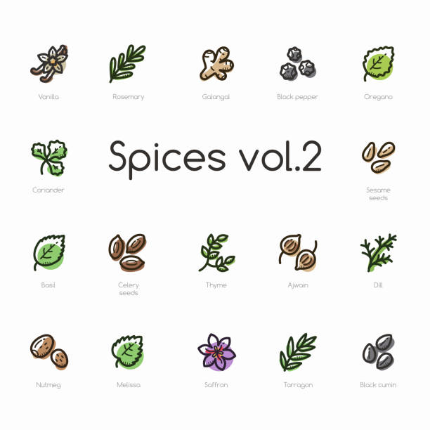 Set of spices line icons isolated on light background Set of spices line icons isolated on light background. Contains such icons as vanilla, thyme, black pepper, saffron, oregano and more. dill stock illustrations