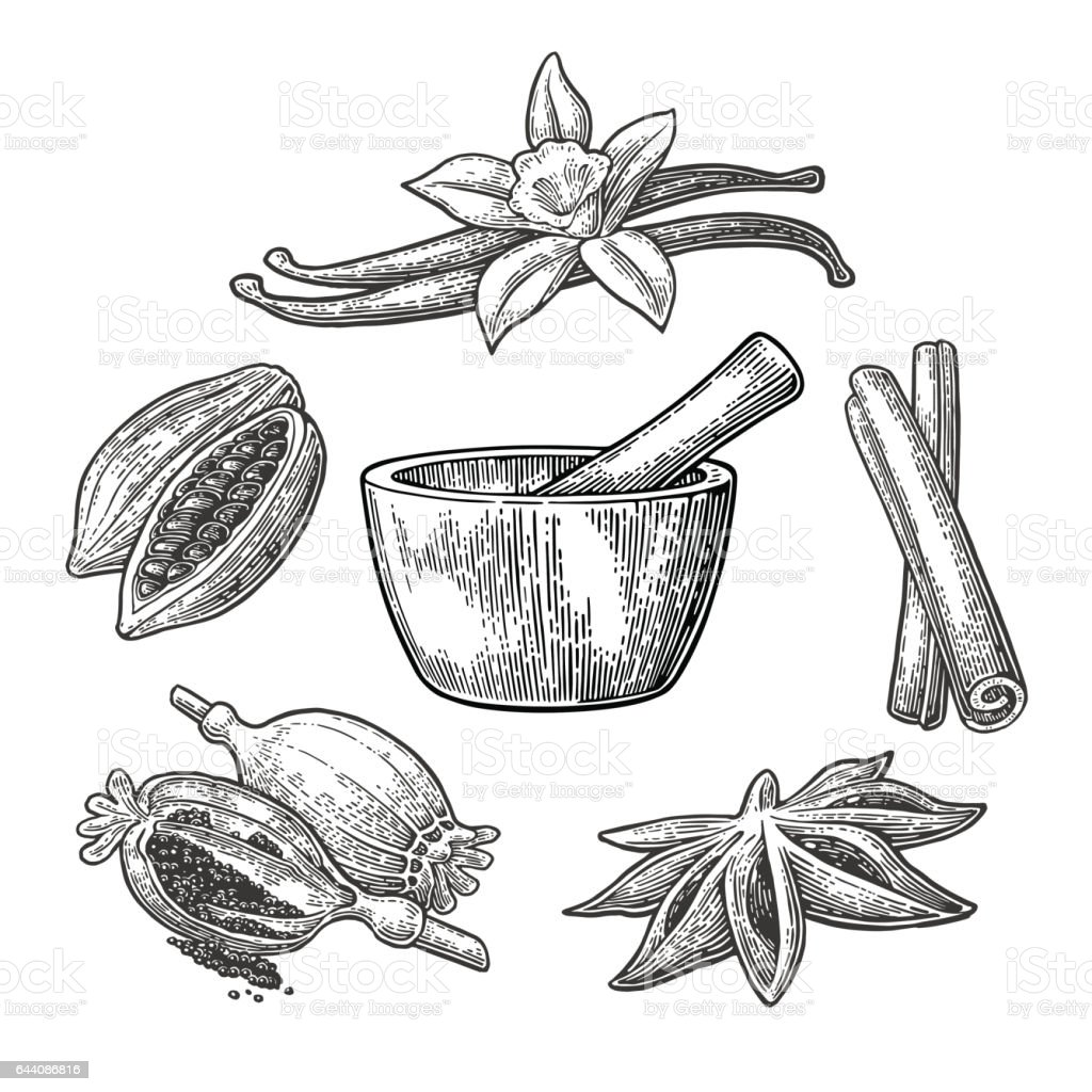 Set of Spices, Mortar and Pestle.. Vintage vector engraved illustration. vector art illustration