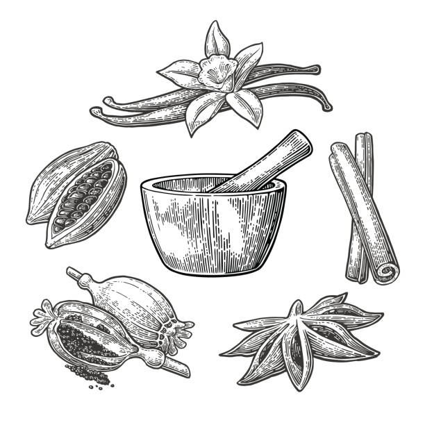 Set of Spices, Mortar and Pestle.. Vintage vector engraved illustration. vector art illustration