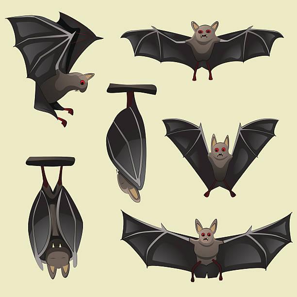 satz von spooky halloween bats - megabat stock-grafiken, -clipart, -cartoons und -symbole