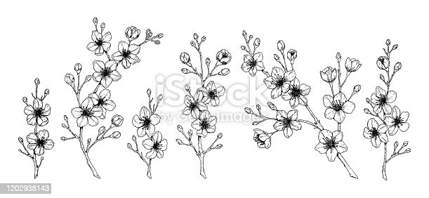 Set of spring cherry flowers. Vector illustration in sketch style isolated on white. Beautiful tree branches in bloom.
