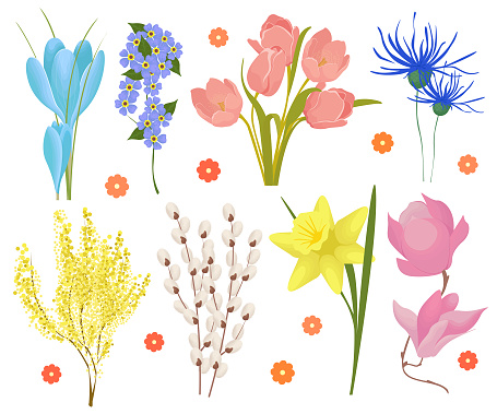 Set of spring flowers crocuses, tulips, daffodils, snowdrops isolated on white background. Primroses, field and garden flowers. Vector illustration