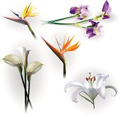 Set of spring flowers for design purposes