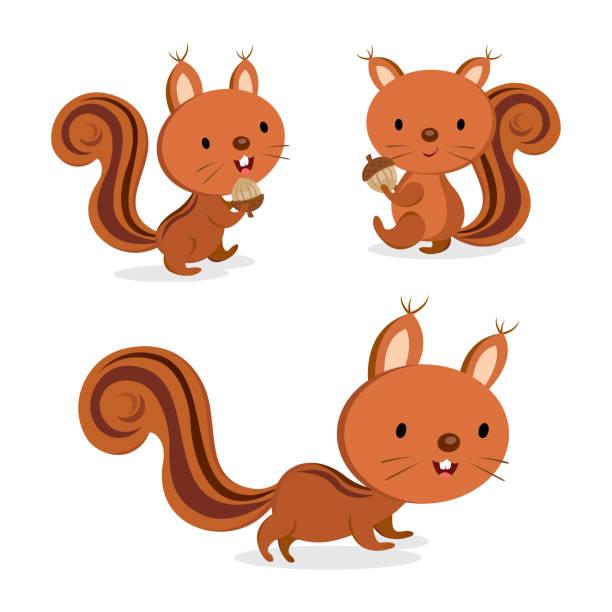 illustrations, cliparts, dessins animés et icônes de jeu d'écureuil dans une posture différente. illustration vectorielle. - écureui