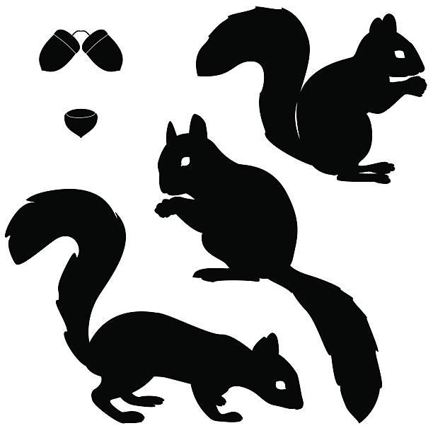 illustrations, cliparts, dessins animés et icônes de écureuils groupe de modèles - écureui