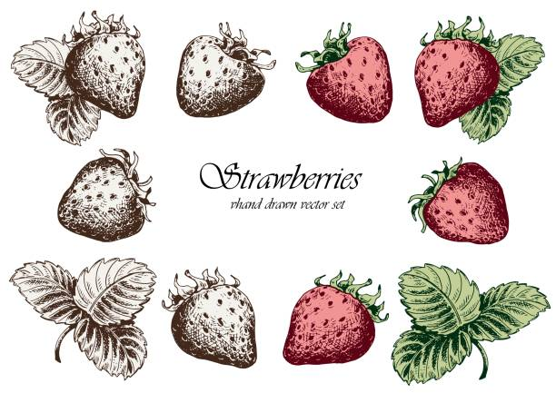 illustrazioni stock, clip art, cartoni animati e icone di tendenza di set of strawberries with leaves. - fragole