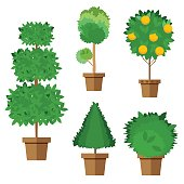 Set of street trees and shrubs in pots. Vector, illustration in flat style isolated on white background EPS10.