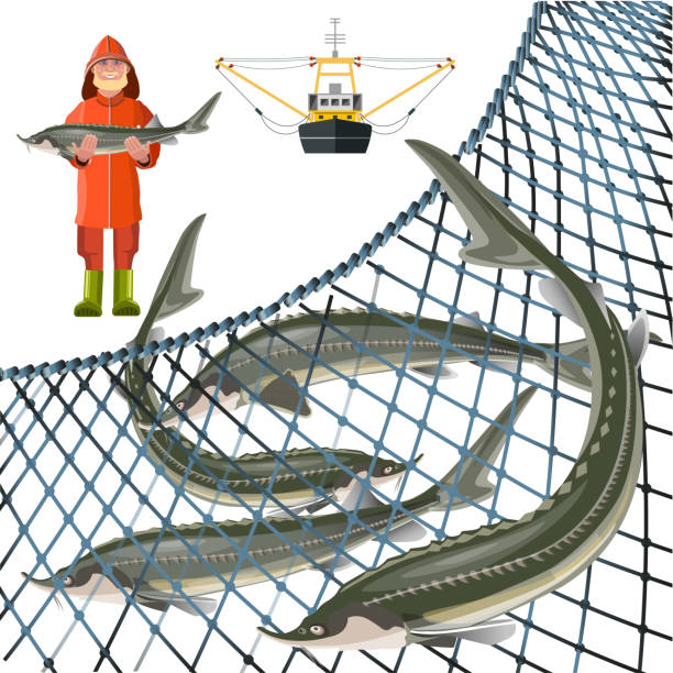 Set of sturgeon fish Set of sturgeon fish with fisher, marine nets and fishing ship. Vector illustration isolated on white background seine river stock illustrations