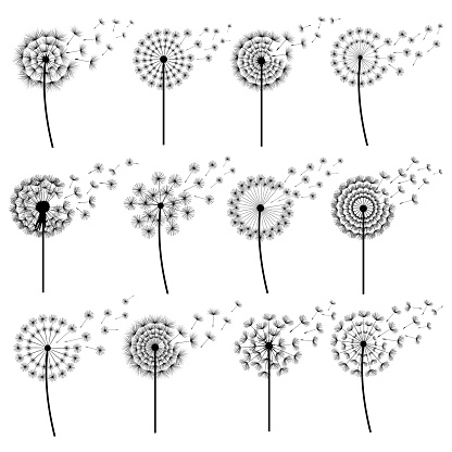 Set of stylized dandelions blowing isolated