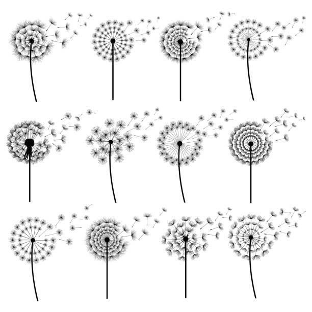 satz von stilisierten löwenzahn weht isoliert - löwenzahn korbblütler stock-grafiken, -clipart, -cartoons und -symbole