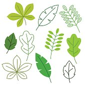 Set of stylized green leaves. Spring or summer foliage