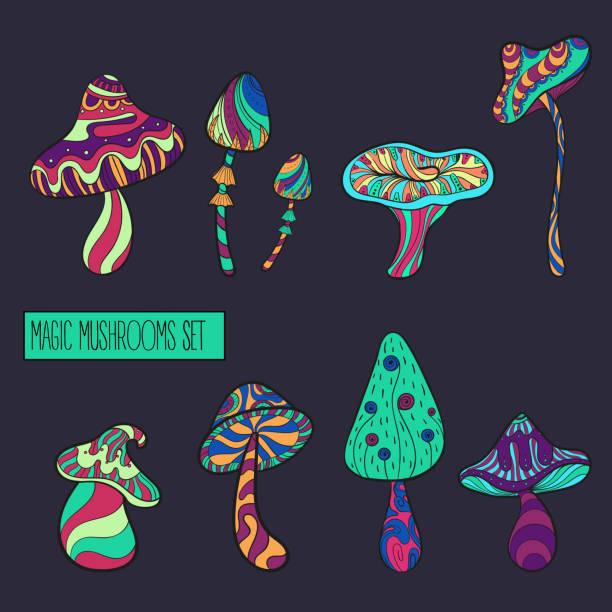 산 색상에서 양식된 버섯 세트 - 버섯 stock illustrations