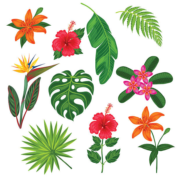 Set of stylized tropical plants, leaves and flowers. Objects for Set of stylized tropical plants, leaves and flowers. Objects for decoration, design on advertising booklets, banners, flayers. bird of paradise plant stock illustrations