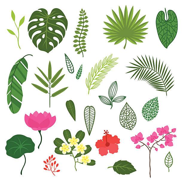 satz von stilisierten tropischen pflanzen, blättern und blumen. - hibiskusgarten stock-grafiken, -clipart, -cartoons und -symbole