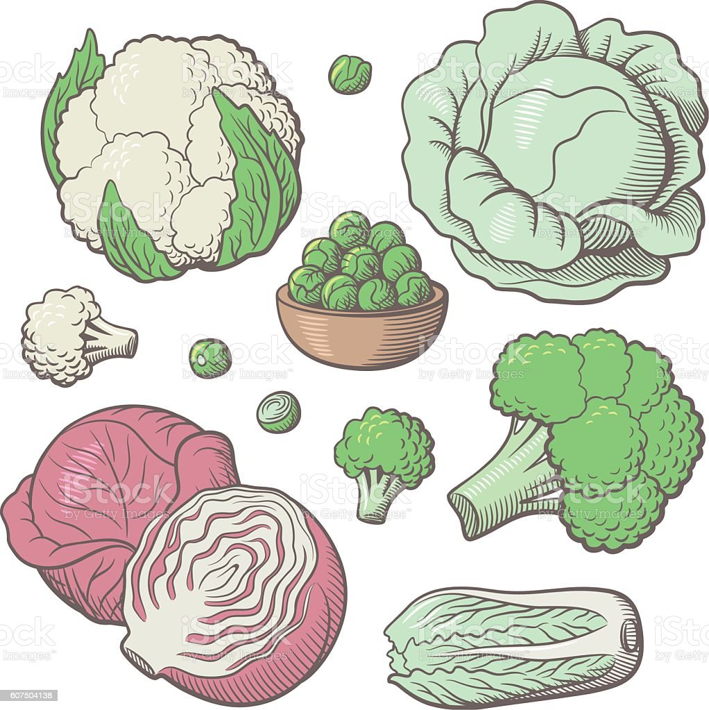 Set of stylized vector vegetables vector art illustration