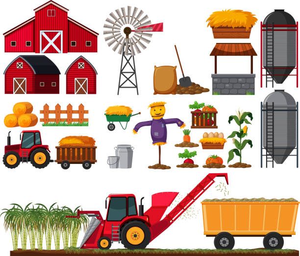 ilustrações, clipart, desenhos animados e ícones de conjunto de elemento de fazenda de cana de açúcar - corn farm