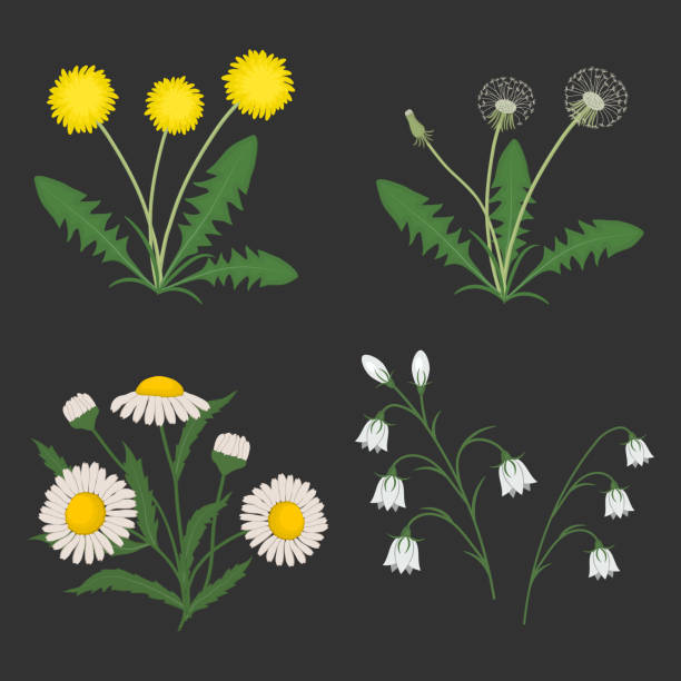 set of summer flowers on a dark gray background - wildflowers stock illustrations, clip art, cartoons, & icons