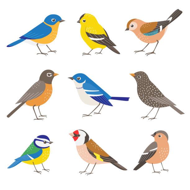 Set of summer garden birds. Set of wild garden birds isolated on white background gold finch stock illustrations