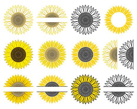 Set of sunflower. Split monogram. Vector paper cut template. Sunflower mandala.