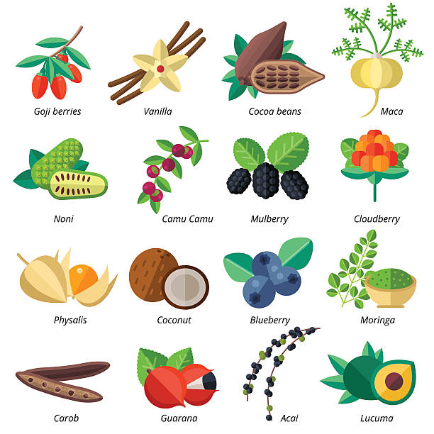 ilustraciones, imágenes clip art, dibujos animados e iconos de stock de set of superfood fruits, vegetables, berries, nuts and seeds. - antioxidante