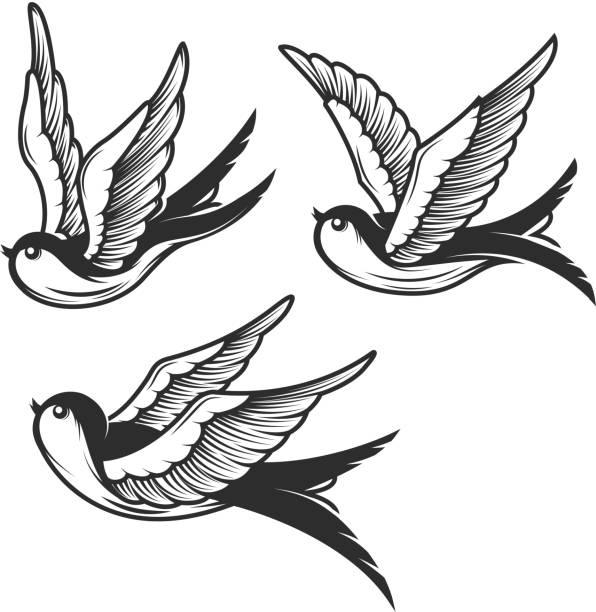 ツバメのイラストが白い背景で隔離のセットです。紋章、記号、バッジ、t シャツのデザインします。ベクトル図 - 鳥のタトゥー点のイラスト素材/クリップアート素材/マンガ素材/アイコン素材