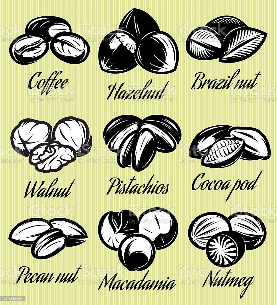 set of symbols patterns different seeds, nuts, fruits vector art illustration