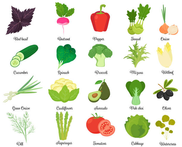 Set of tasty vegetables Set of different herbs and vegetables isolated on white. scallion stock illustrations
