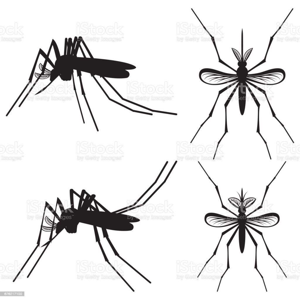 Set Of Templates Elements With Mosquito Zika Stock Vector Art & More ...