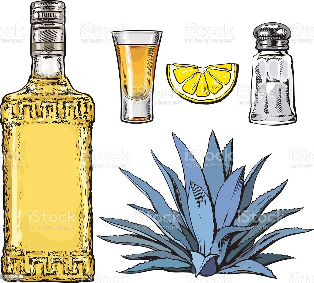 Set of tequila bottle, shot, salt mill, agave and lime vector art illustration