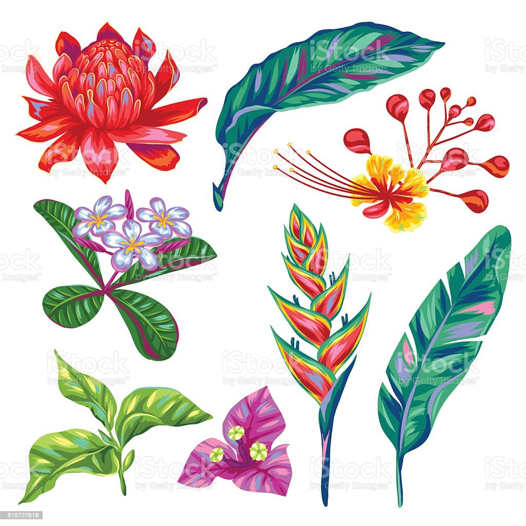 Set of Thailand flowers. Tropical multicolor plants, leaves and buds - ilustración de arte vectorial