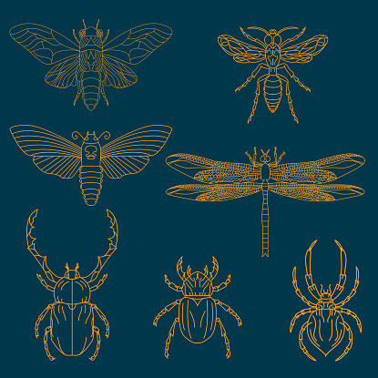 Set of the insects