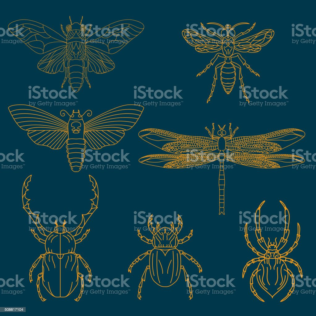Set of the insects vector art illustration