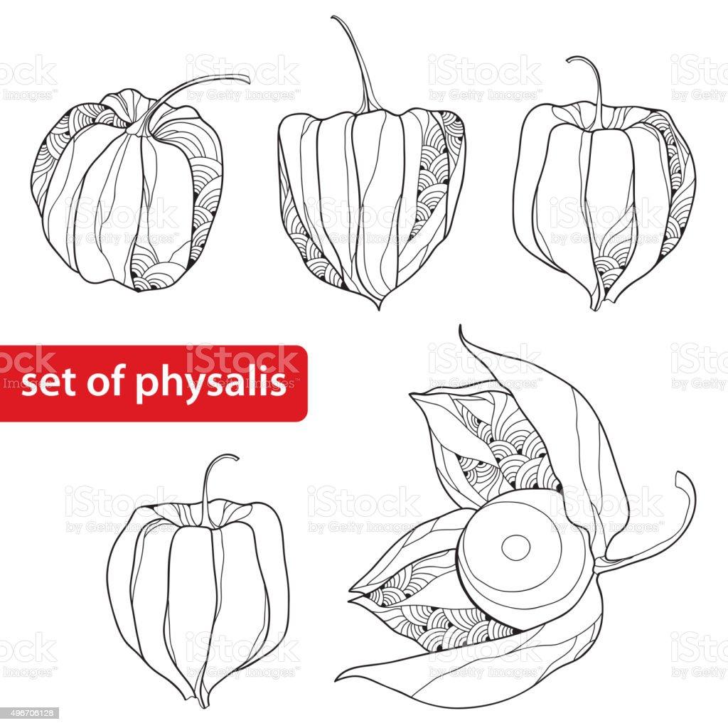 Conjunto de Physalis o cabo de gooseberry Aislado en blanco - ilustración de arte vectorial