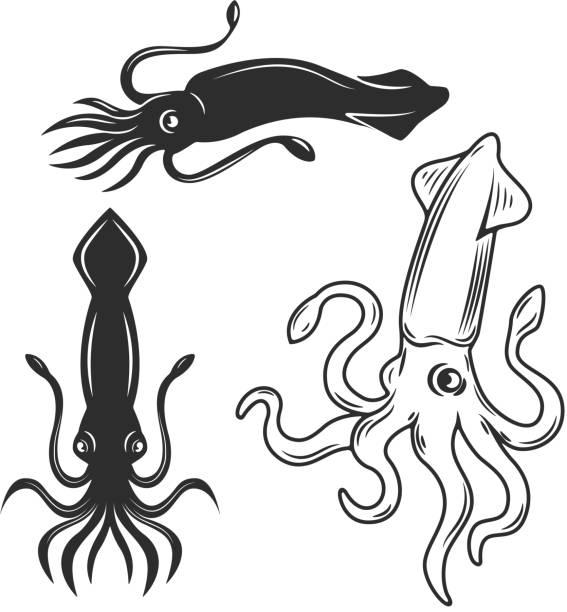 satz von der tintenfisch-illustrationen isoliert auf weißem hintergrund. design-elemente für emblem, label, marke, zeichen. - kalamar stock-grafiken, -clipart, -cartoons und -symbole