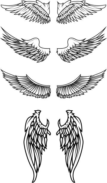 illustrations, cliparts, dessins animés et icônes de ensemble de vecteur d'ailes. - tatouages d'anges