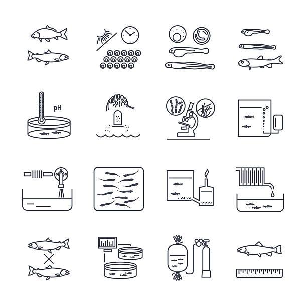 ilustrações de stock, clip art, desenhos animados e ícones de set of thin line icons aquaculture production process - aquacultura