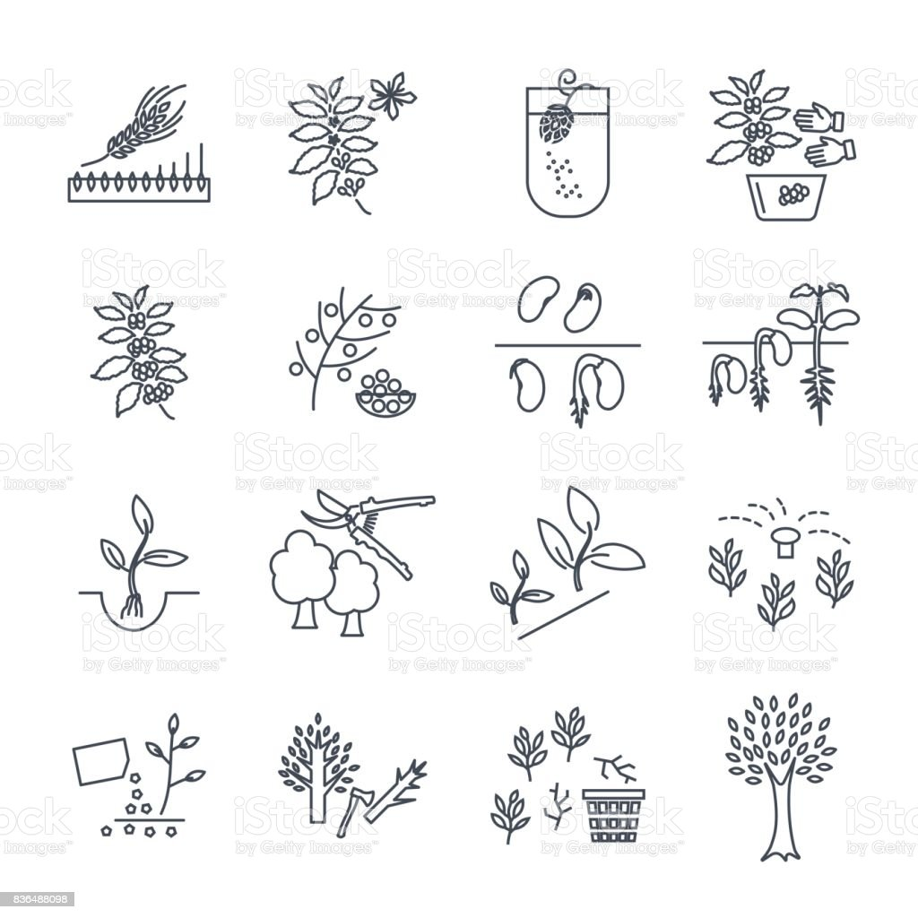 set of thin line icons plant, herb, grower, coffee, beans vector art illustration