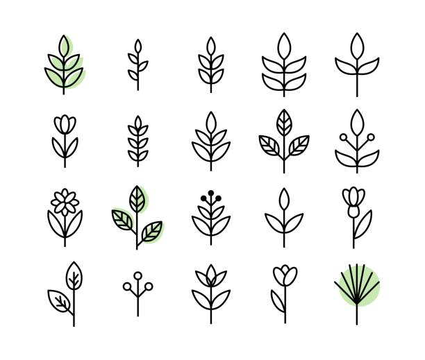 illustrazioni stock, clip art, cartoni animati e icone di tendenza di set of thin line leaf icons vector - foglie