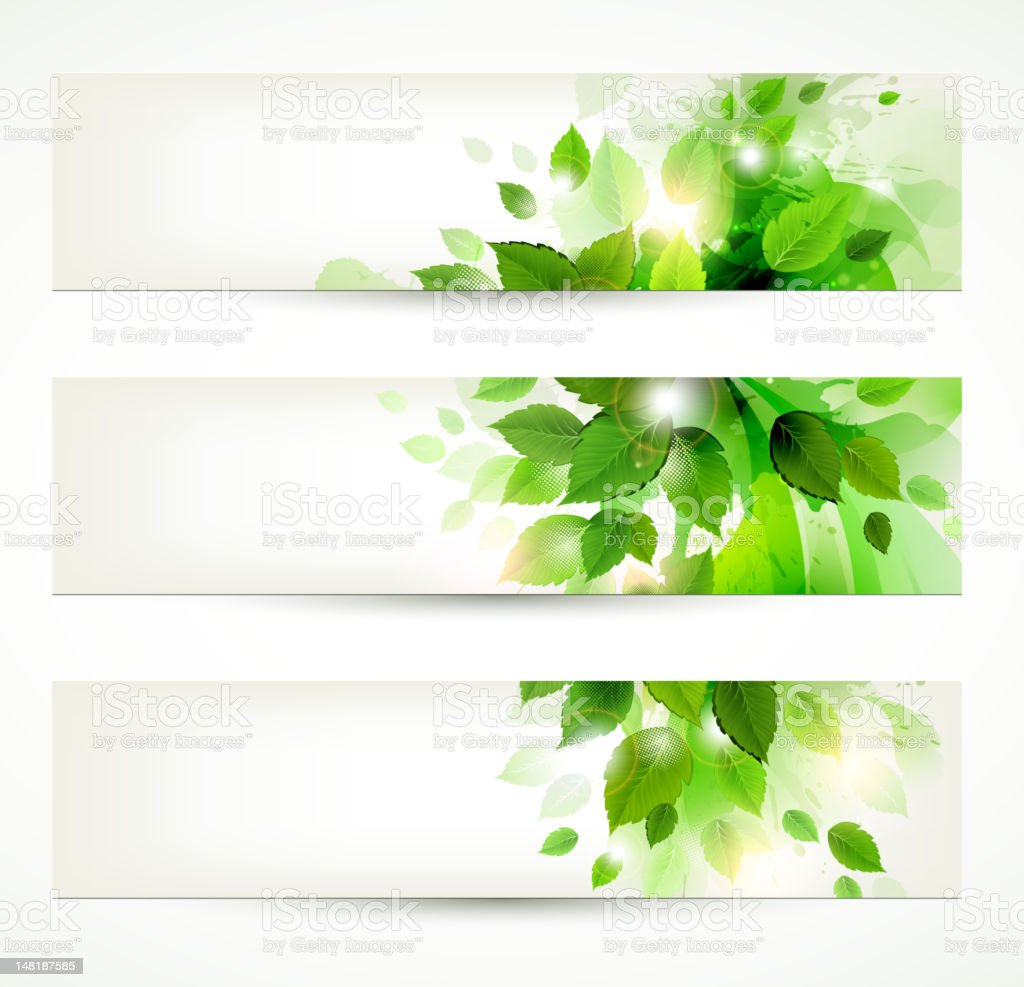 set of three banners with fresh green leaves royalty-free stock vector art