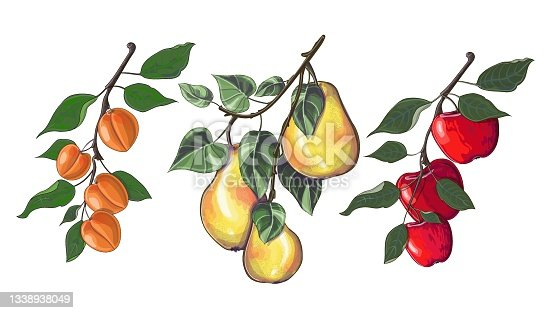 istock Set of three branches with apples, pears and apricots in cartoon style. 1338938049